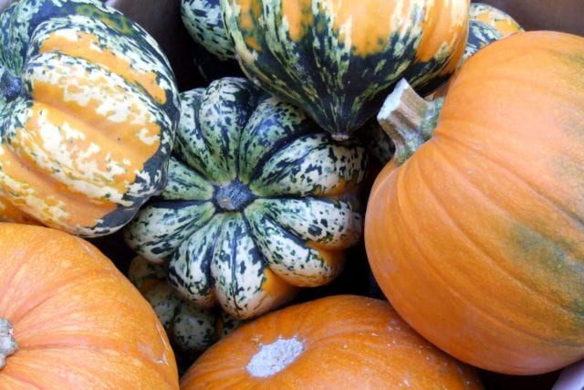 a variety of fresh pumpkins