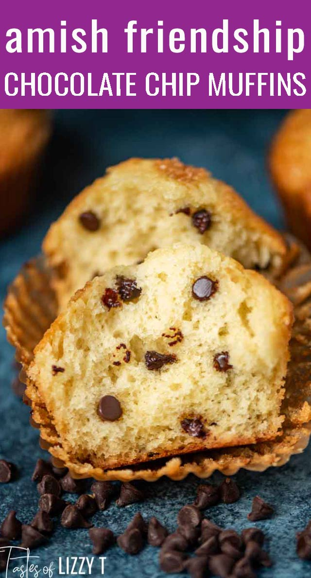 A kid-friendly way to use up that Amish sourdough starter. Amish Friendship Chocolate Chip Muffins have a soft, fluffy texture with a lightly sweet flavor. via @tastesoflizzyt