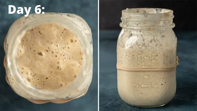 day 6 sourdough starter